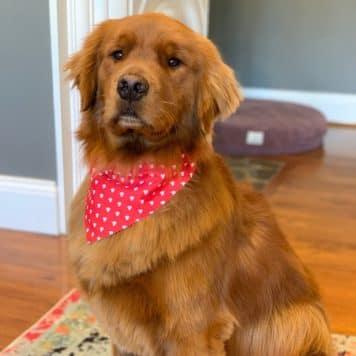 Bentley The Dog