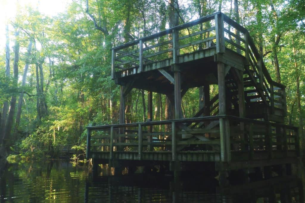 Audubon Center at Francis Beidler Forest